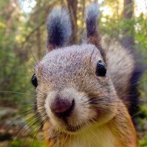 Suomalaisen luonnon neljä vuodenaikaa kysyy linnuilta ja eläimiltä nokkeluutta ja kekseliäisyyttä.