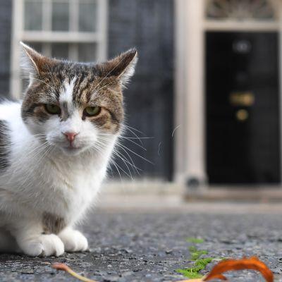 Juovikas Larry-kissa etualalla, taustalla näkyy Downing Street 10:n etuovi.