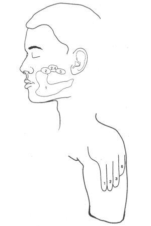 piirros kasvojen ja sormien ihon aistialueista