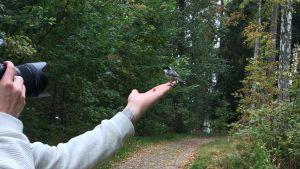 En fågel sitter på fotografens hand medan han tar en bild.