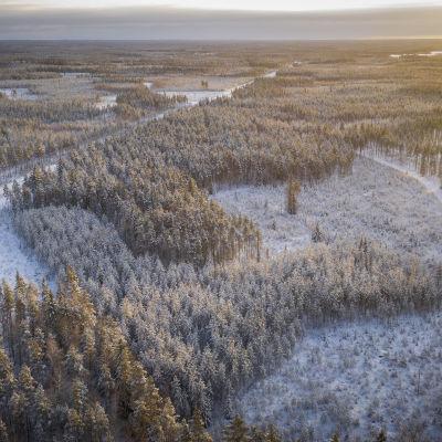 Ilmakuva metsäalueesta.