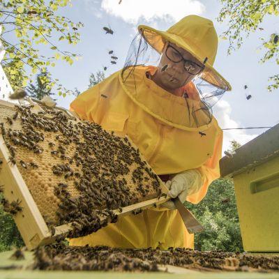 Marja Linnilä katsoo mehiläiskennoja.
