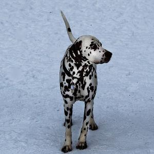 Hunden alice ger patienterna trygghet