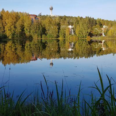 Sammakkolampi Puijonlaaksossa Kuopiossa, syksy 2019.