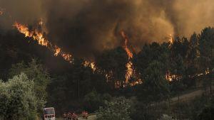 Metsäpalot riehuivat sunnuntaina Oleirosin kunnassa sijaitsevassa Castelo Brancossa.