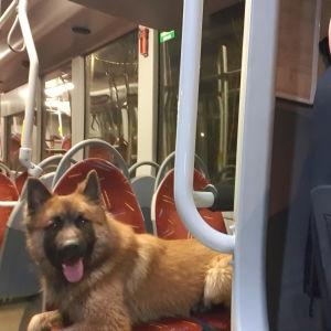 En hund ligger över två säten på en tom buss. I förgrunden syns busschaufören, en skallig man med glasögon som tar bilden som en selfie.