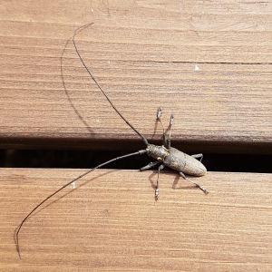 Denhär insekten såg Toms dotterson Benjamin. Vad kan det vara?
