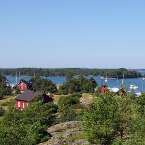 Gullkron i Åbolands skärgård.