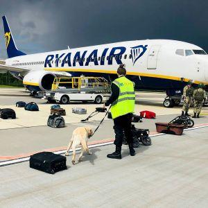 Säkerhetspersonal och en hund granskar bagaget som funnits ombord på Ryanairplanet som tvingades landa i Minsk.