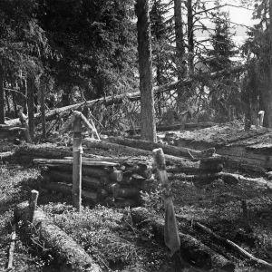 I. K. Inhan valokuvassa Kostamuksen kalmisto