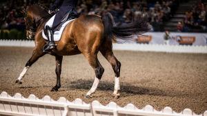 Tallinnan Horse Showssa