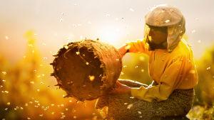 Hunajankerääjänainen ja mehiläisiä auringonvalossa. Kuva dokumenttielokuvasta Hunajan maa.