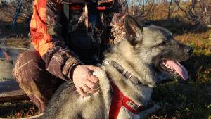 Luontosarja pohjoisen uljaasta eläimestä ja sen kohtaamisesta ihmisen kanssa.