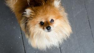 I en av butikerna hittade vi världens sötaste hund.