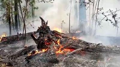 Brinnande och förkolnade träd.