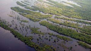 Människan har förstört stora delar av regnskogen.