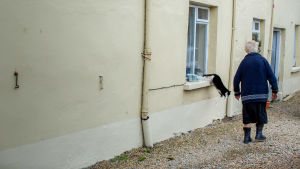 Bybo och katt i Pettigoe