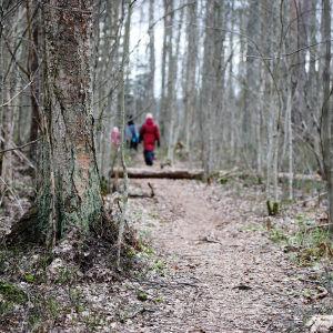 Terisjärven luonnonsuojelualue