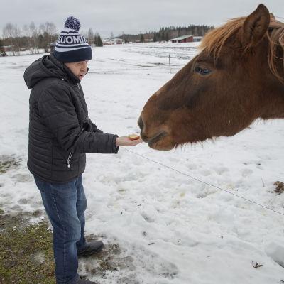 Siilinjärveläinen Olli Miettinen syöttää hevosta.