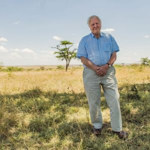 Attenborough seisoo savannilla.