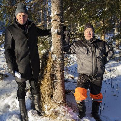 Yrittäjä Veijo Tirkkonen ja metsätalousyrittäjä Tero Räsänen nojailevat puuhun.