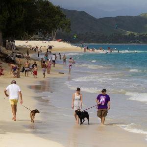 Stranden Kailua Beach på Hawaii