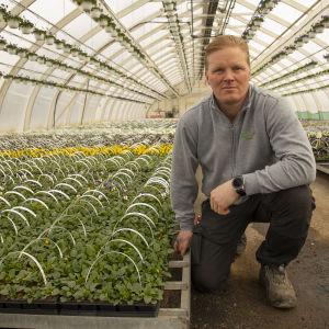 Yrittäjä Sami Heimonen orvokkien äärellä Heimosen puutarhan kasvihuoneessa.