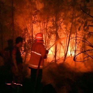 Brandmän jobbar med släckning av bränder i Indonesien.