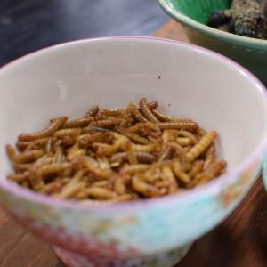 Mjölmaskar i en skål.