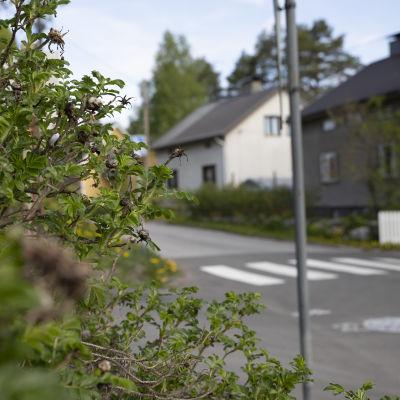 Omakotialuetta Kuopiossa Pohjois-Savossa.