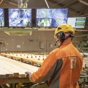 Mies tarkastelee puutavaraa Stora Enson sahalla.