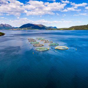 Laxodling i norsk fjord.