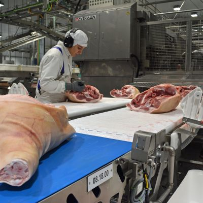 Uudessa sikaleikkaamossa kinkut jatkavat ihmiskäsistä robotin uumeniin. Röntgen kuvaa luiden paikat, joiden perusteella kone osaa leikata lihat oikein.