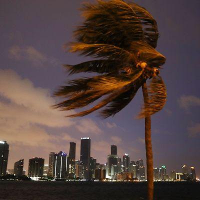Orkanen Irma drar in över Miami, Florida den 9 september 2017.