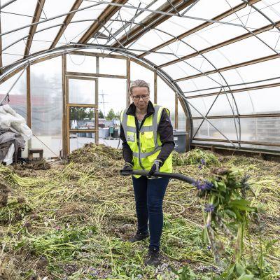 Nainen siirtelee haittakasveja talikolla.