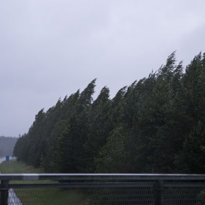 Päivö-myrsky kaataa puita Itä-Suomen alueella.