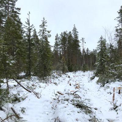 Kaistalehakkuu Ylöjärven Kurussa