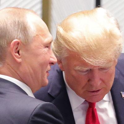 Vladimir Putin viskar i Donald Trumps öra.