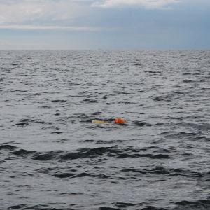 Kaksi tutkijaa noutavat mittauslaitteita veneellä. Vedessä punainen poiju.