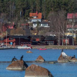 Skarvar i Lovisaviken.