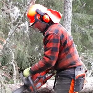 Dan Falk arbetar som skogshuggare åt Vasa stad.