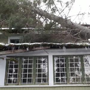 En stor gran har fallit över verandataket på Nelins villa i Sundom.