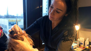 Traja Malmström putsar en hunds tänder.