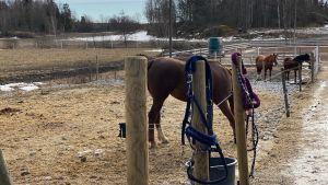 Hästar i en hage.