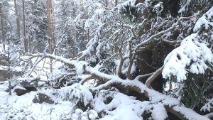 Talvinen metsä