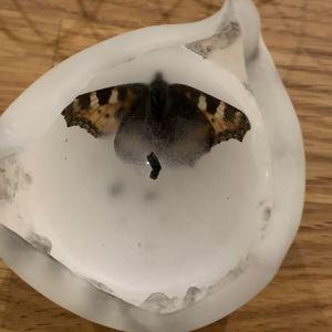 en fjäril i ett ljus.