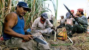 Mexikanska lantarbetare tar paus i arbetet med att skörda sockerrör