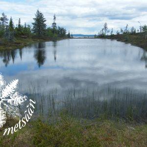 Järvi Riisitunturin kansallipuistossa