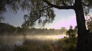 Porvoonjoki aamu-usvassa.