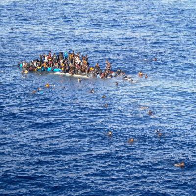 Flyktingar försöker simma i säkerhet från sjunkande båt.